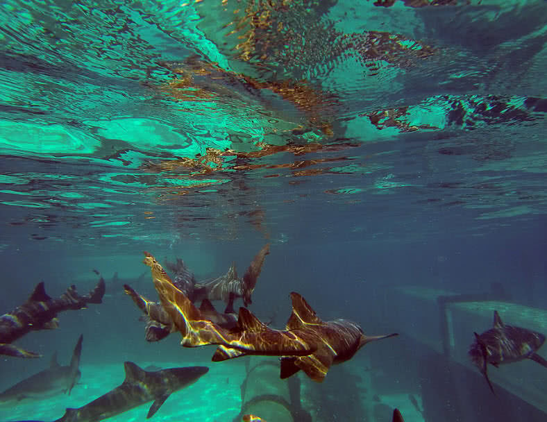 Top 5 Must See Underwater Places In The World - The ...