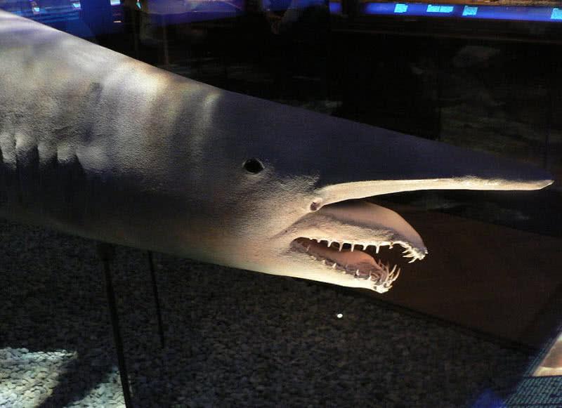 amazing deep ocean creatures