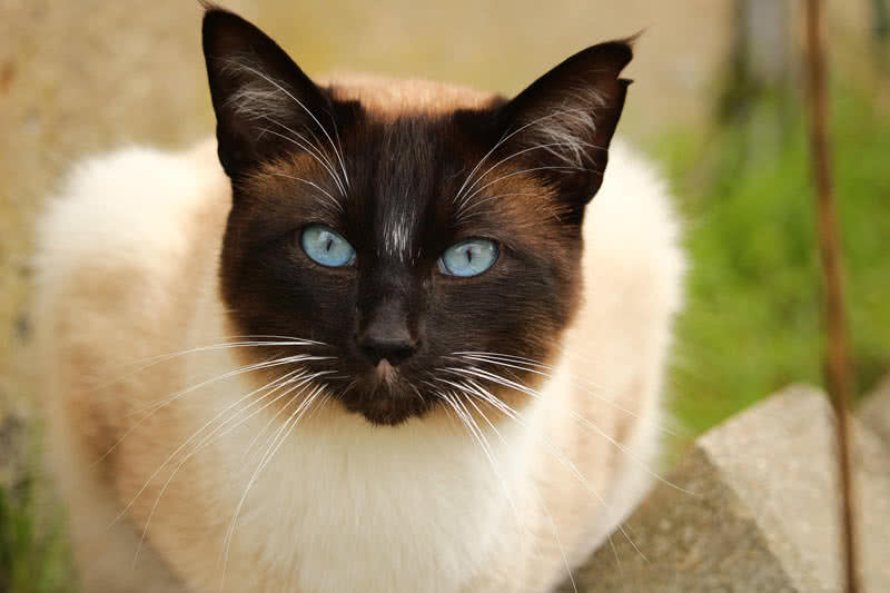 most beautiful cat breeds