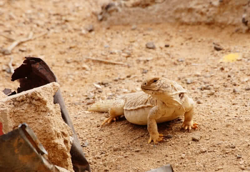 Top 10 Amazingly Adaptive Sahara Desert Animals - The Mysterious World