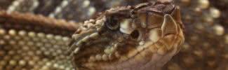 most dangerous amazon rainforest animals