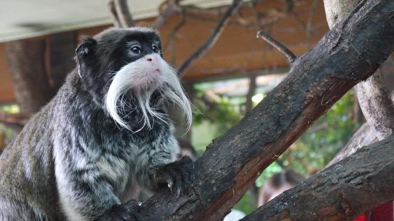 most beautiful beards in animal kingdom